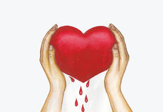 Blooded heart watercolor painting. Hand drawn watercolor painting of blooded heart in two hands Stock Images
