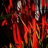 Bloodgrass Arkivbild