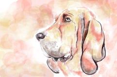Bloodhaund. Dog aquarelle painting imitation Stock Illustration