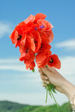 Bloodroot flower and female hand on blue sky Stock Image
