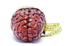 Bloody Brain with Tape on White. A bloody brain, on a white background, with a measuring tape around it. Check out the other images in this series royalty free stock photography