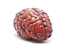 Bloody Brain on White. A bloody brain, on a white background. Check out the other images in this series royalty free stock photography