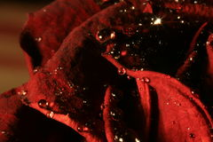 Bloody diamonds. A close-up shot about a rose Royalty Free Stock Image