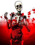 Bloody Guts. A skeleton with internal organs with added blood effect Stock Image