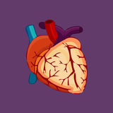 Bloody Halloween parts - beating heart artery vein. Stock Images