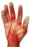 Bloody hand Royalty Free Stock Photo