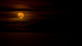 Bloody moon. Flying birds silhouette over full red moon Stock Photos