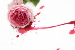 Bloody Rose Royalty Free Stock Image
