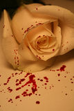 Bloody rose. A beautiful bloody rose high in detail and beauty Royalty Free Stock Photography