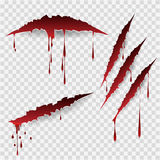 Bloody scratch marks. Bloody scratches. Vector scratch marks with blood drops Royalty Free Stock Photo
