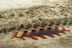 Bloody wheel track on the sand stock image