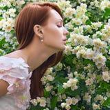 Bloom Royalty Free Stock Photos