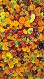 bloom obrazy royalty free