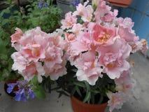 bloom Zdjęcia Royalty Free