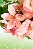 Bloom apple-tree flowers Royalty Free Stock Image