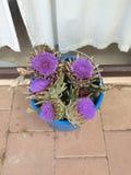 Bloom of an artichoke stock photo
