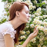 Bloom Royalty Free Stock Images