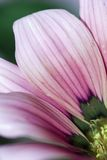 bloom, blisko Zdjęcie Stock