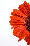 bloom, blisko Obraz Stock
