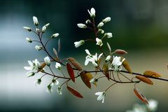 Bloom, Blooming, Blossom Royalty Free Stock Images