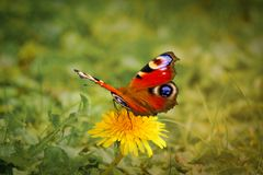 Bloom, Blossom, Butterfly Stock Image