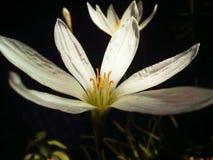 Bloom, Blossom, Close-up Stock Photo