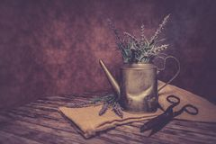 Bloom, Blossom, Container, Decor, Stock Photography