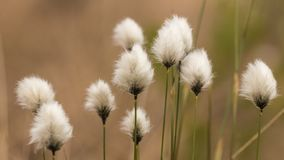 Bloom, Blossom, Delicate royalty free stock photos
