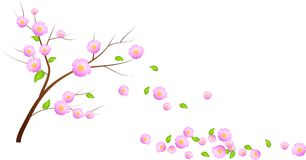 Bloom cherry tree with falling leaves Stock Images