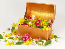 Bloom Chest Royalty Free Stock Images