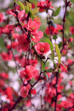 Bloom closeup Royalty Free Stock Photo