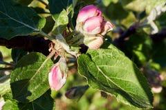 bloom drzewa Obrazy Stock
