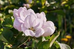 bloom drzewa Zdjęcie Stock