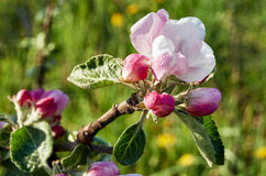 bloom drzewa Obrazy Royalty Free