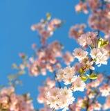 bloom drzewo Fotografia Royalty Free