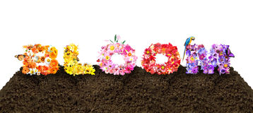 Bloom Flower Typography. On soil Royalty Free Stock Images