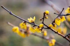 Bloom. Flowers bloom bloomed blooming seasons very good one flower fairies Stock Images