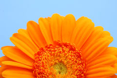 Bloom fower detail orange. Flower orange background abstract nature blue Royalty Free Stock Photo