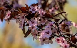 Bloom fruit trees on the farm. Spring stock photography