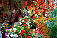 bloom kwiaty Obraz Royalty Free