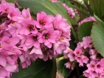bloom kwiaty Zdjęcia Stock