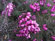 bloom kwiaty Fotografia Royalty Free