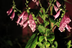bloom kwiaty Obrazy Stock