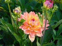 bloom kwiaty zdjęcie royalty free