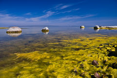 bloom morza Obraz Stock