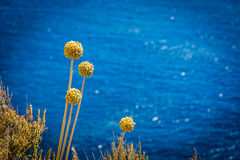 Bloom near the sea. Bloom and cactus near the sea royalty free stock photography