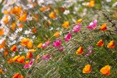 bloom pole zdjęcie stock