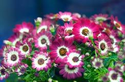 bloom roślin Obrazy Royalty Free