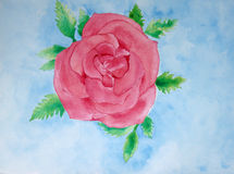 Bloom Rose Painting Stock Images