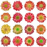 Bloom set generated texture Stock Images